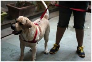 walk the dog nutrition plan